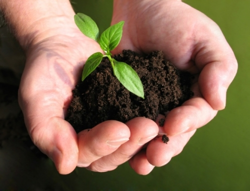 Уничтожение почвенного покрова